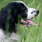 Отличия больной собаки от здоровой