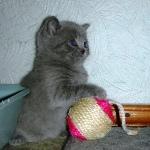 Игры и игрушки для маленьких котят