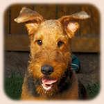 Характер и особенности собак