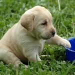 Как с первых дней приучить щенка?