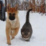 Уникальные способности собак и кошек