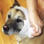 Первая помощь собаке