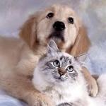 Выбираем домашнее животное вместе