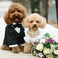 Собачья свадьба правда или вымысел?