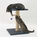 Сделаем безопасными когти у кошки