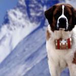 Профессия собака-спасатель