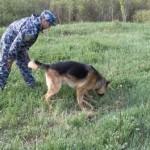 Воспитание служебных собак