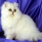 Почему необходимо вычесывать кошек