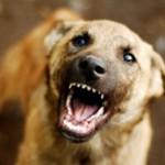 Как уберечь дом от щенячьих зубов