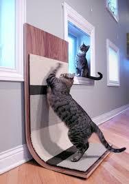 Ремонт и кошки