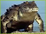 http://zoopriut.ru/img2/crocodile