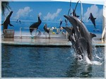 Выступление дельфинов